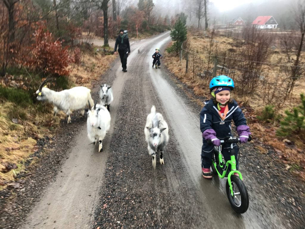 Biking cycling kids children europe goats trip