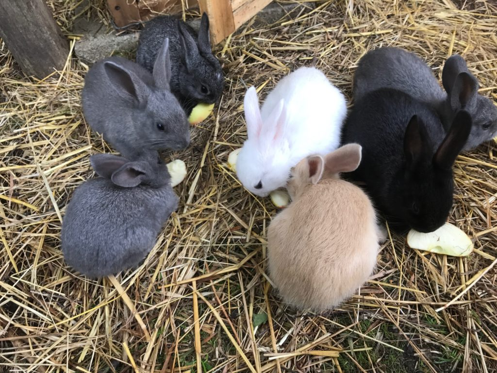 bunny rabbits cute animals farm staycation countryside