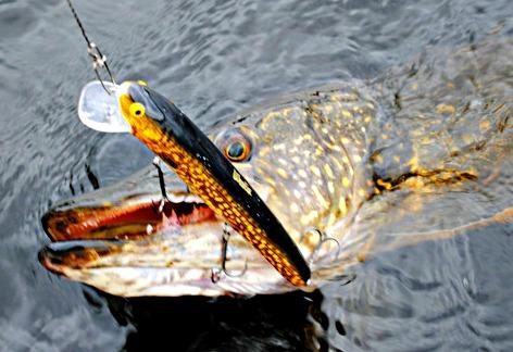 pike fishing places swedish lakes